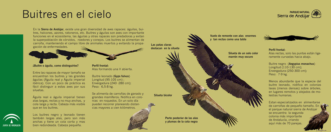 Buitres Parque Natural Sierra de Andújar Buitre leonado buitre negro señaletica Diego Ortega Alonso