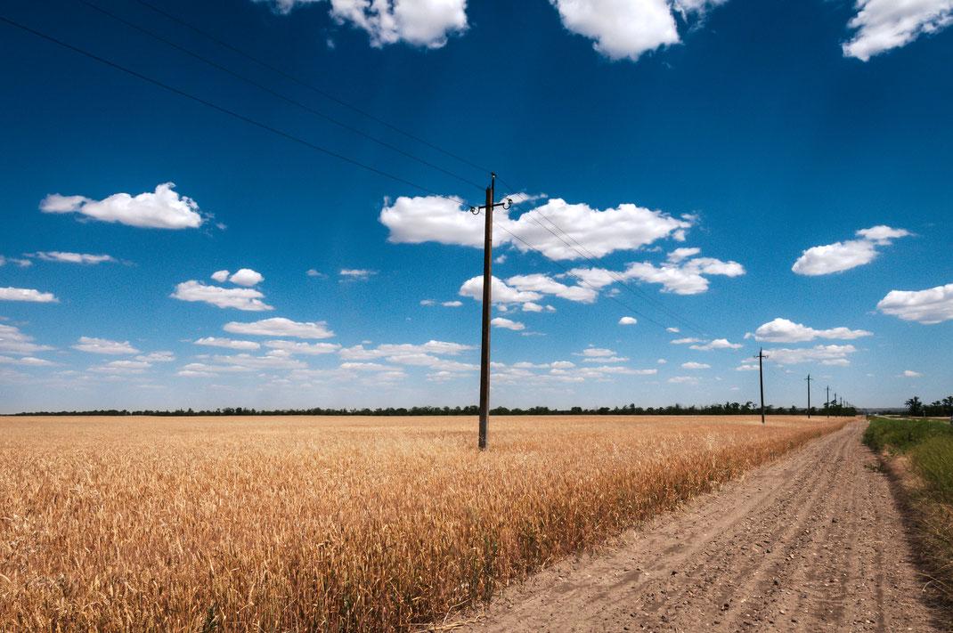 Weizenfeld unter dem blauen Himmel kostenlos herunterladen