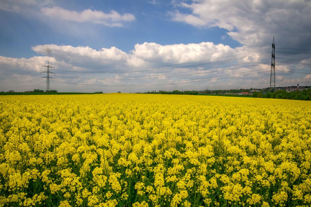 Rapsfelder in Deutschland für den Biodiesel kostenlos herunterladen