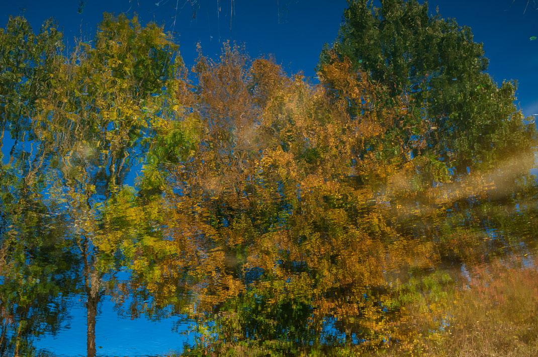 Spiegelung der Bäume im Wasser kostenlos herunterladen
