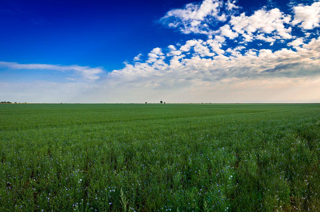 Ein blühendes Leinfeld unter einem klaren blauem Himmel mit dezenten weißen Wolken eignet sich besonders für Portraitaufnahmen und Familienfotos.
