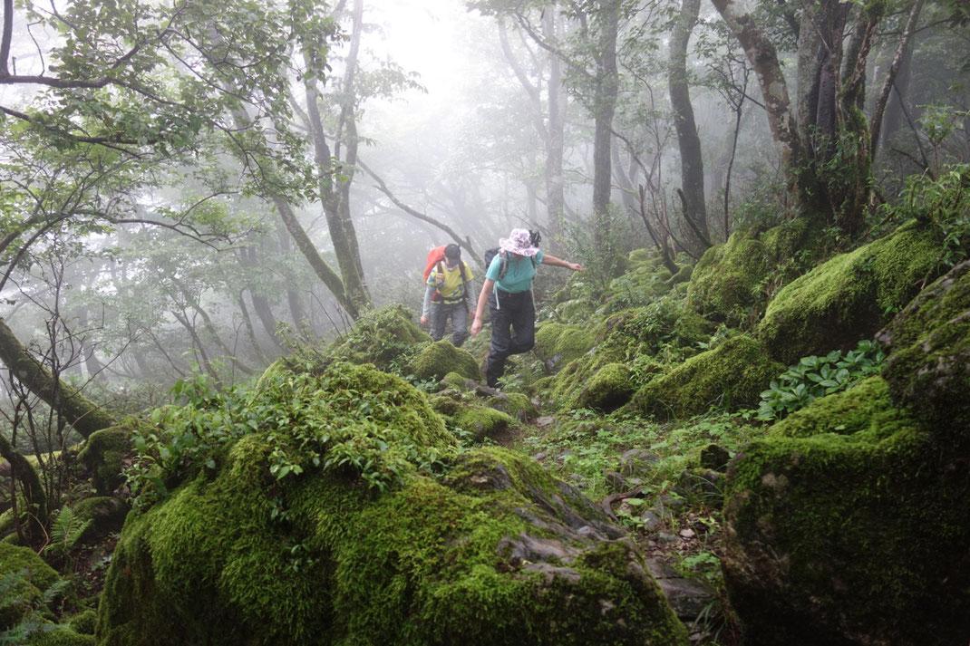 伊吹山 北尾根 国見峠 マウンテンサポートやまや 登山 トレッキング