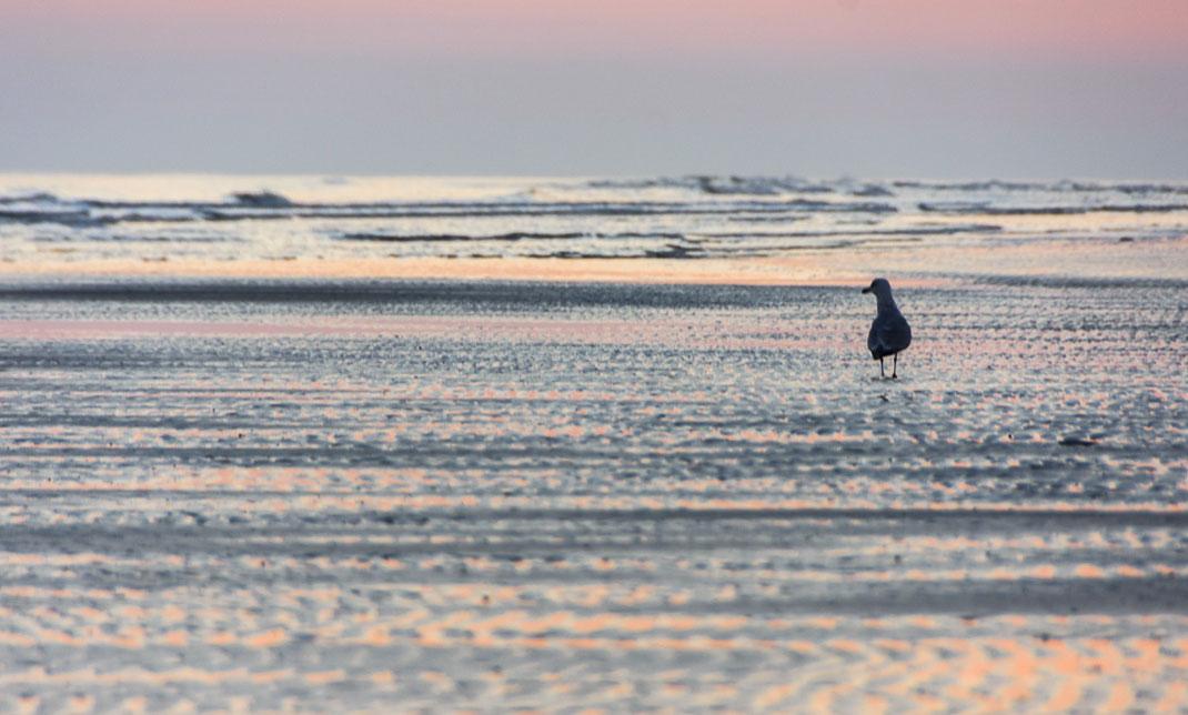 Langeoog, Sonnenaufgang, Meer, Urlaub, Nordsee, Deutschalnd