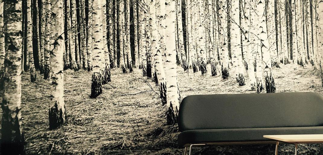 Unterschied & Macher   Blick in den Wald
