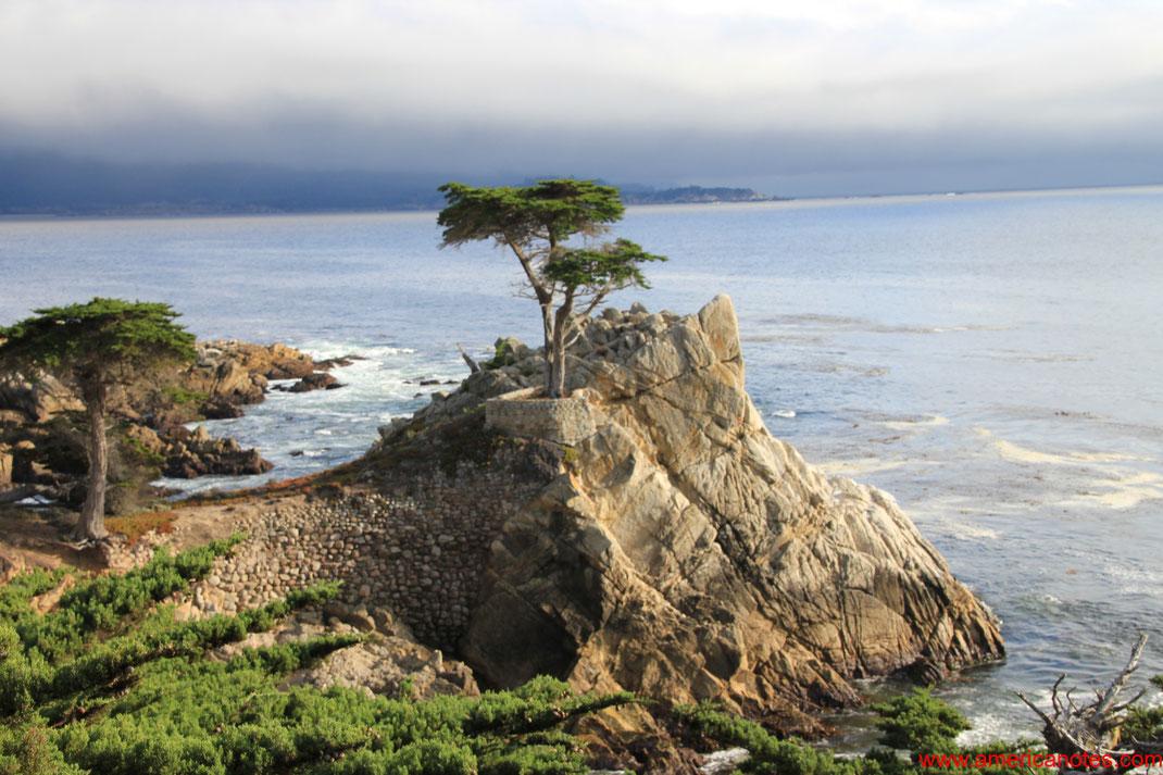 Der Lone-Cypress-Tree auf dem 17-Mile Drive der Monterey Halbinsel, Kalifornien, USA