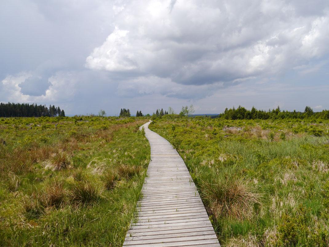 """Ganz  """"auf dem Holzweg""""... Wanderung durch eine der urtümlichsten Landschaften Europas"""