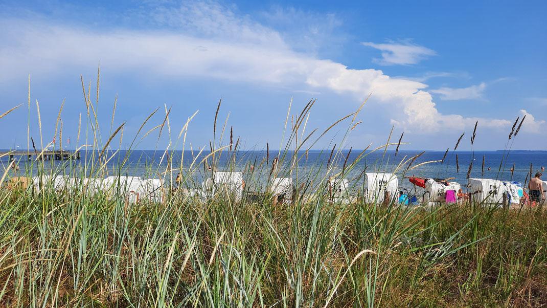 Ostseedünen mit Strandkörben zwischen Haffkrug und Scharbeutz