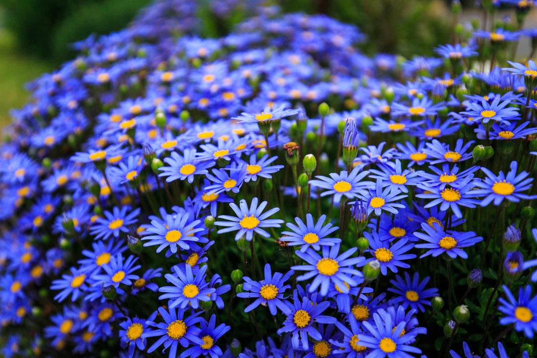 Massif de fleurs ManuPaysage, Paysagiste Herbignac