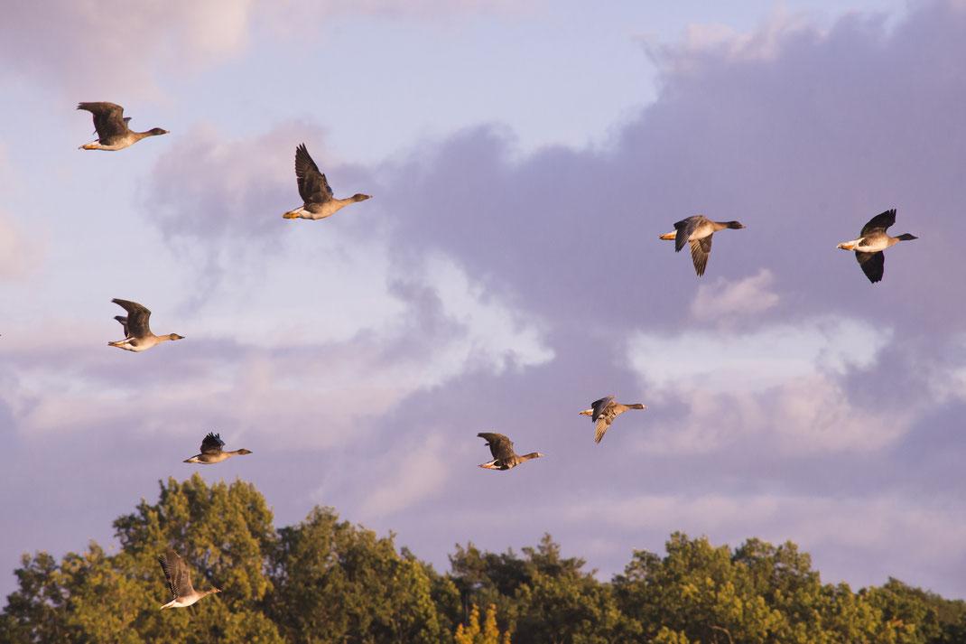 Erleben Sie das unvergleichliche Naturschuspiel der Vogelzüge im Oderbruch und im europäischen Vogelschutzgebiet