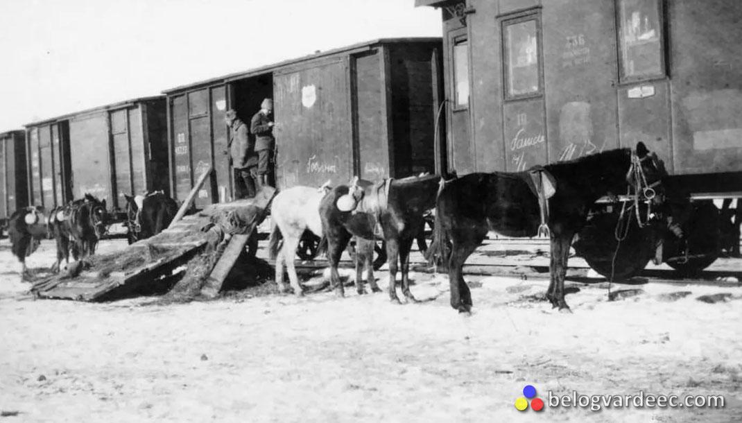 Лошади корпуса генерала Павлова, январь 1920.