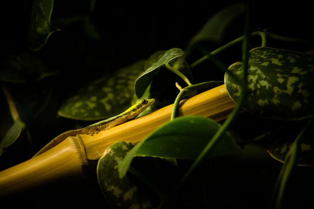 kleines grünes Männchen