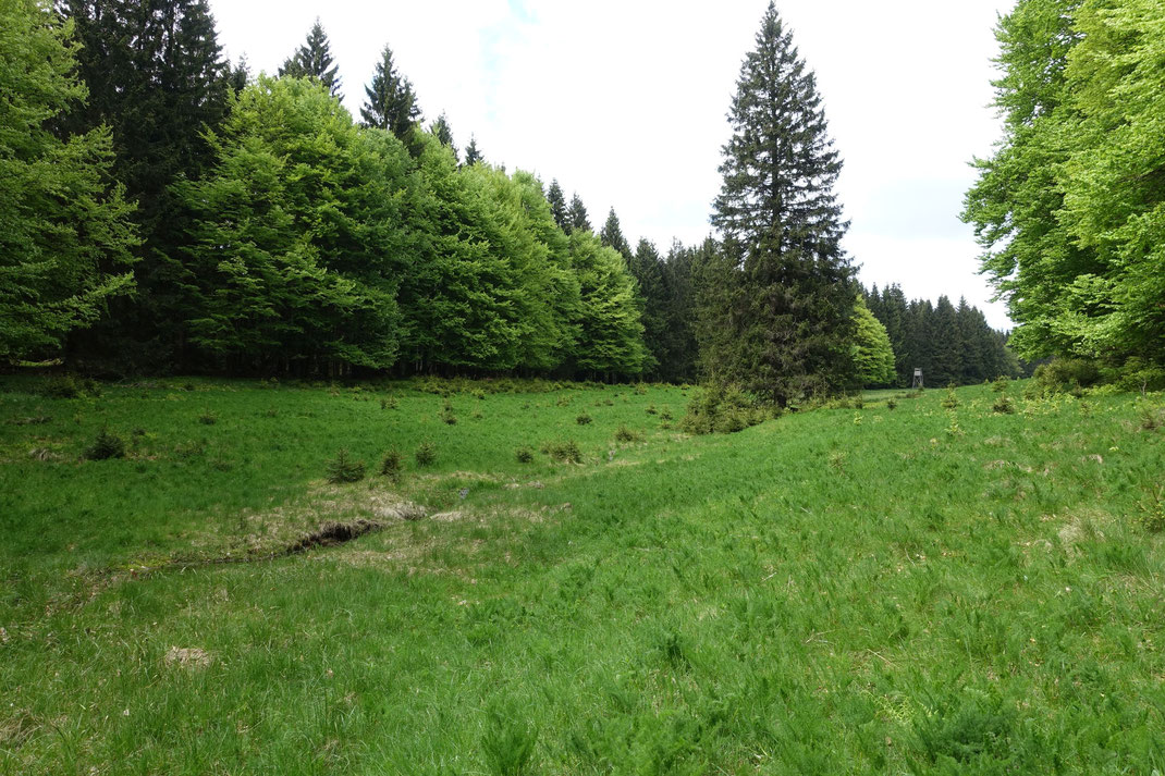 Bärwurzwiese am Schlezenbach