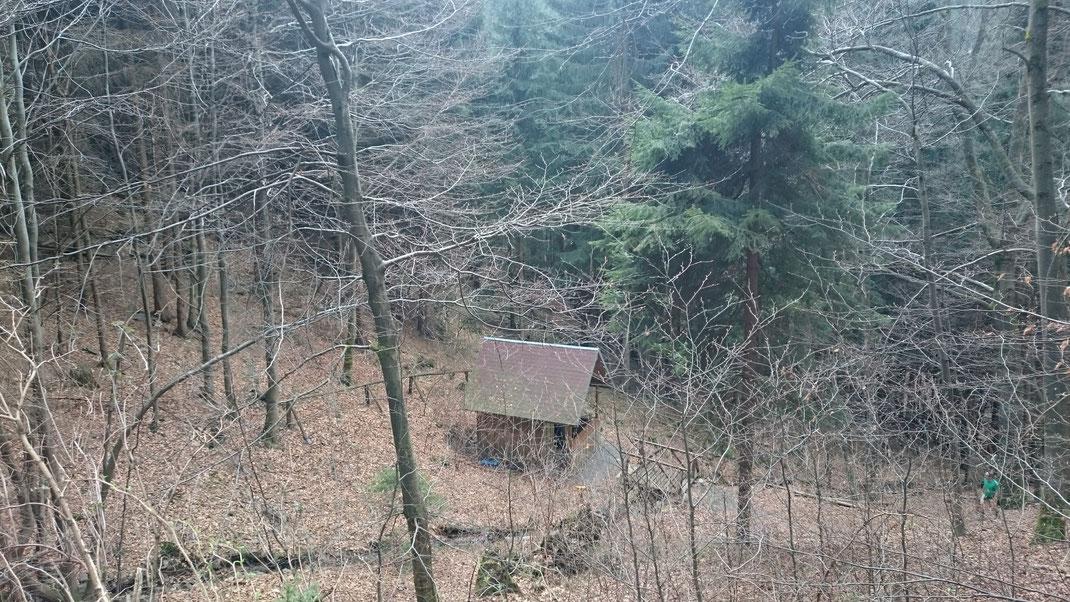 Schutzhütte, auf der ehemaligen Welschenwiese, im Hintergrund die Fichtenanpflanzung im Vordergrund Buchenanflug, 2017