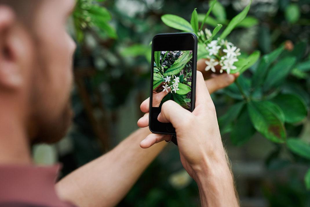 lightroom and photoshop presets for flowers,blumen,pflanzen kostenlose app