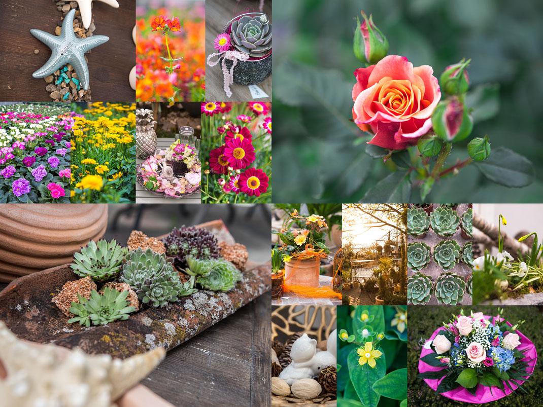 Lightroom und photoshop presets Blumenbilder, Pflanzenbilder, Blumenfotos, Pflanzenfotos