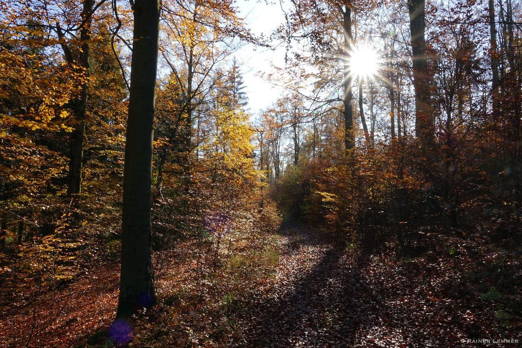 Naturwaldreservat Nauberg