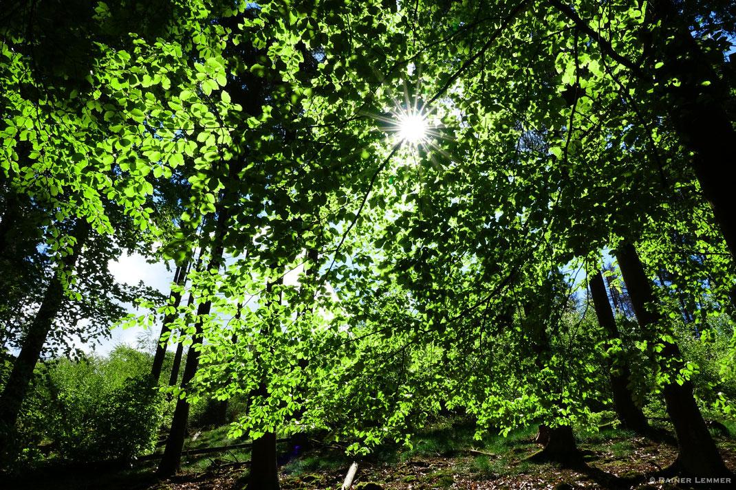 Frisches Grün und Sonnenschein im Mai