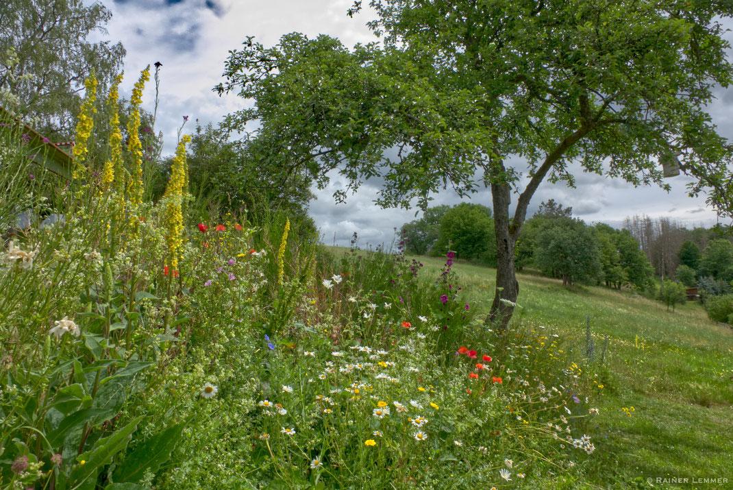 Blumenwiese in Helmeroth