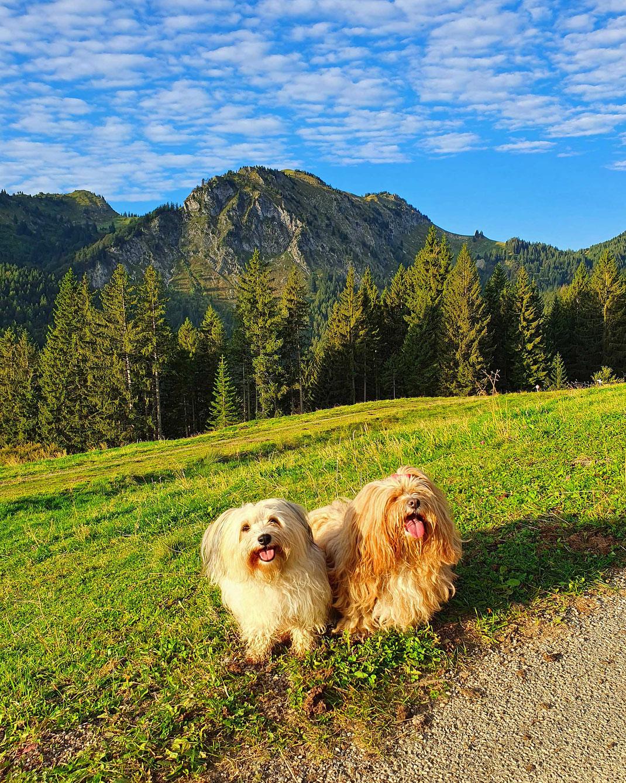 Tami und Bella in den Bergen