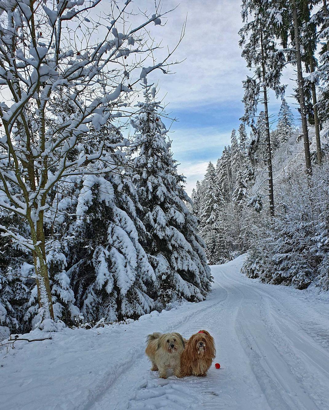 zwei Hunde im Schnee