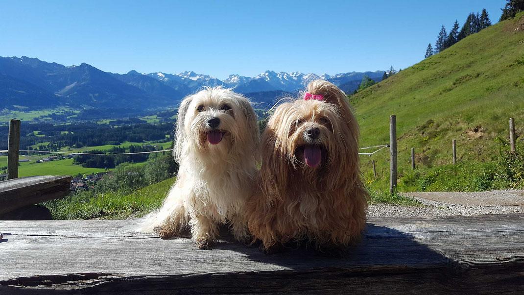 Wanderung mit Hund im Allgäu