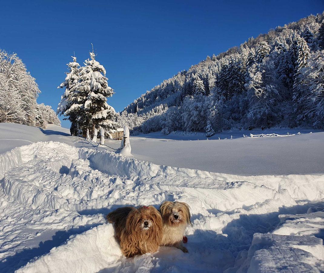 zwei Hunde im Schnee bei Sonnenschein