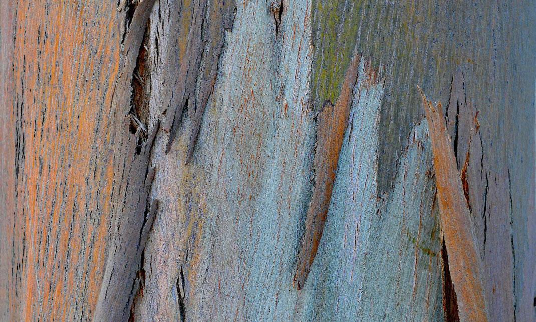 Eukalyptus Portugal 2017