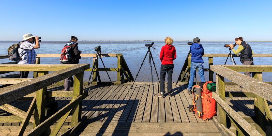 Mitten im Schlick bei Ebbe | Beobachtergruppe von shorebirder.ch bei Schobüll am Beobachten von Limikolen | Foto: Stephan Trösch