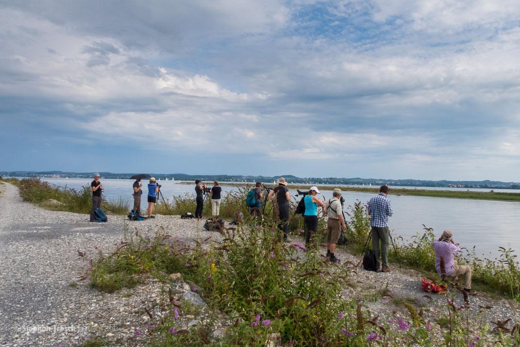 Die Exkursionsgruppe von BirdLife Luzern am 01.09.2019 an der Mündung des Alpenrheins im Vorarlberger Rheindelta (Foto: Stephan Trösch)