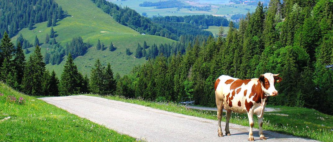 Schöne Landschaft um den Campingplatz in Bad Feilnbach