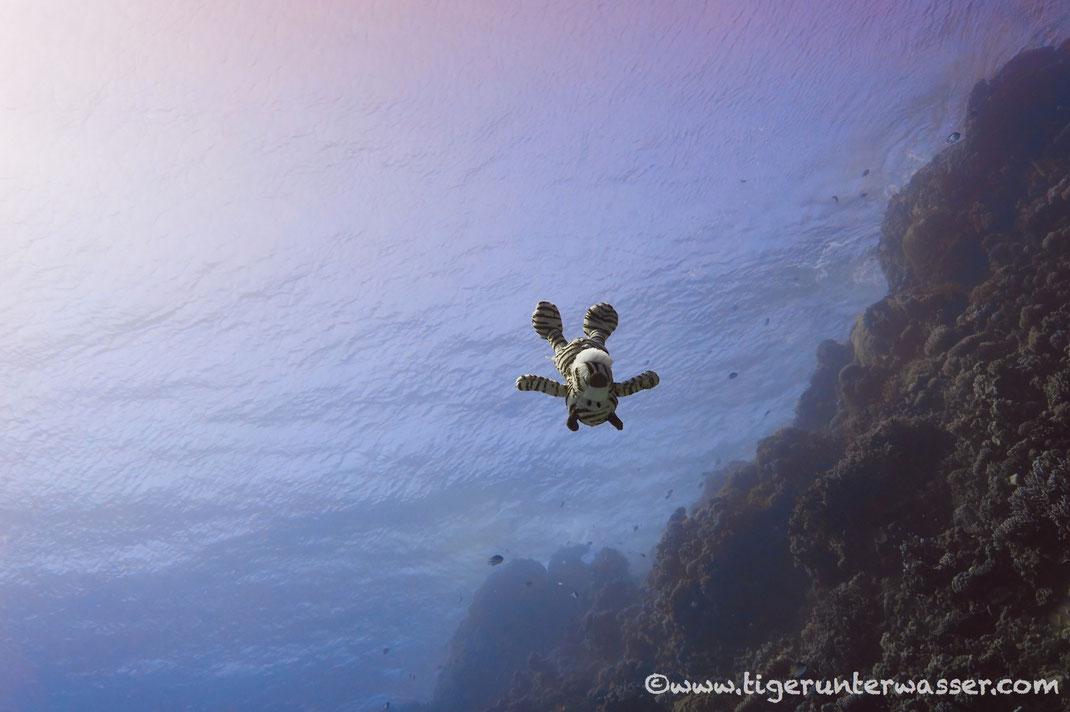 ....tauchen zu gehen und die Unterwasserwelt erkunden....