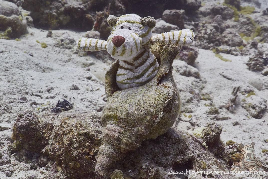 ...Tiger Snail...