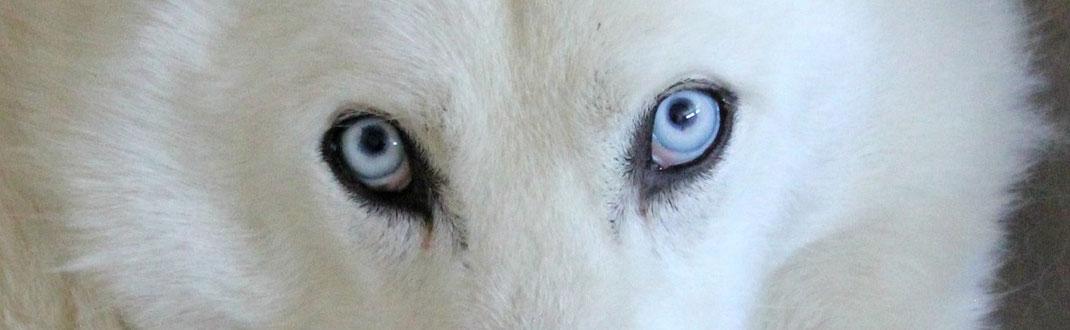 Augenfarben Der Wölfe Skurriles Okkultes Aber Immer Lehrreiches