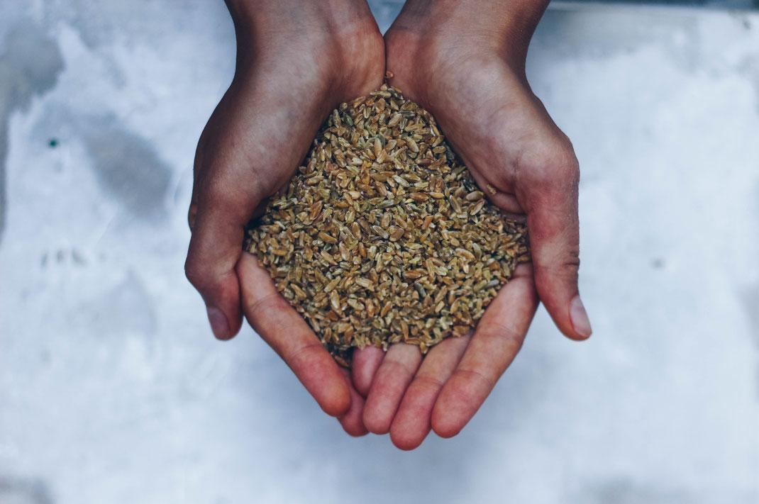 Getreide in Händen