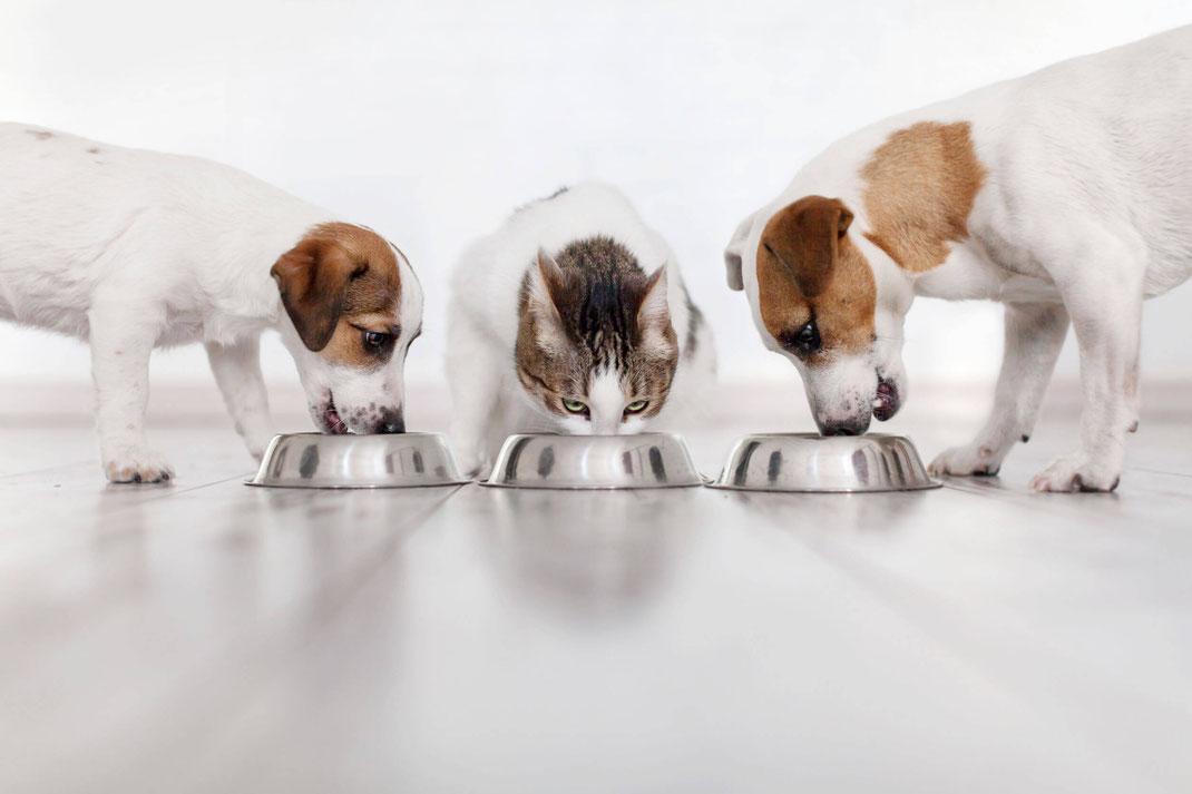 Uta Wilmer tierärztliche Ernährungsberatung Futtermittelunverträglichkeit Hunde Katze fressen