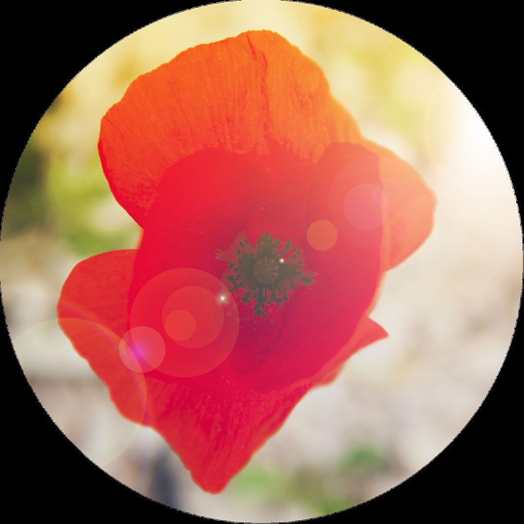 Katharina Steiner Arbeitsweise Kath Visual Pink Blumen Sonne blau