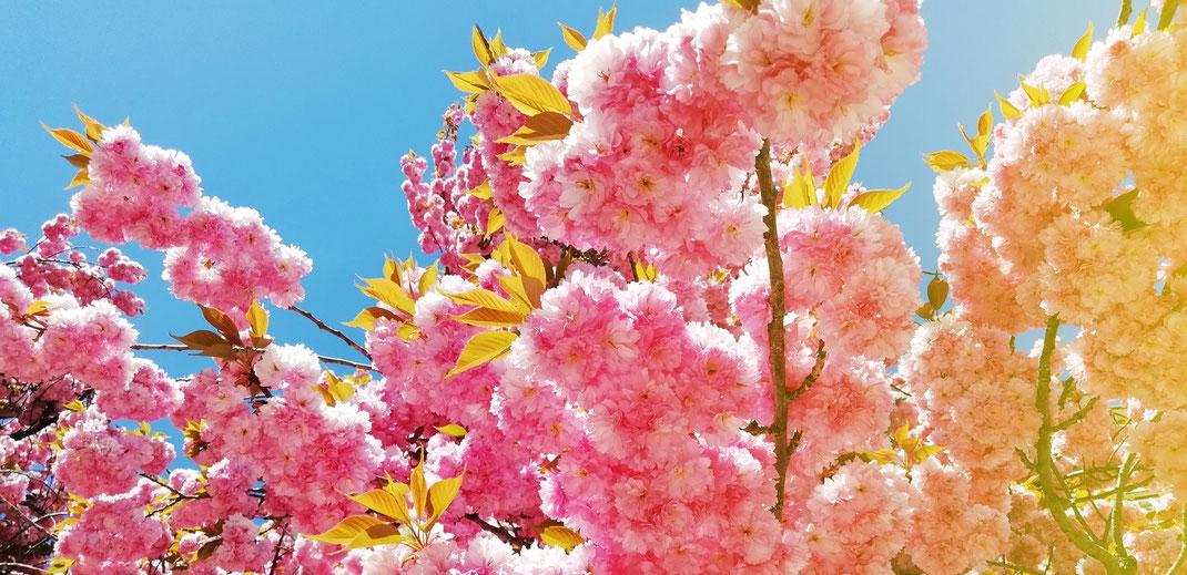 Kath Visual, Blog, Kreativität, Natur, Blüten, Frühling