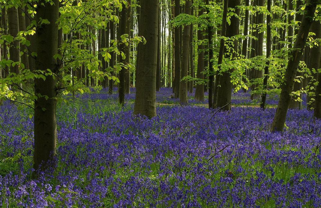 Flache Waldstücke lassen tief blicken und selbst abgeknickte Stämme lassen sich in Szene setzen.