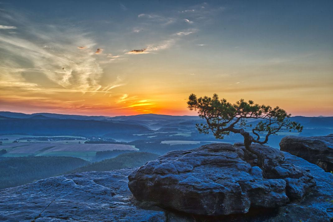 Die Barbarine (Pfaffenstein) wie diese Kiefer ist immer wieder ein geliebtes Motiv meiner Fotografie. Hier kurz vor Sonnenaufgang.