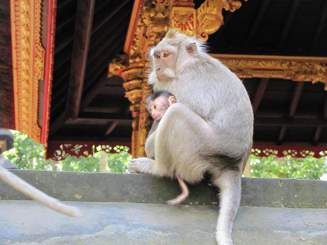 Encore un bébé singe qui ressemble à un petit vieux, vous ne trouvez pas ?