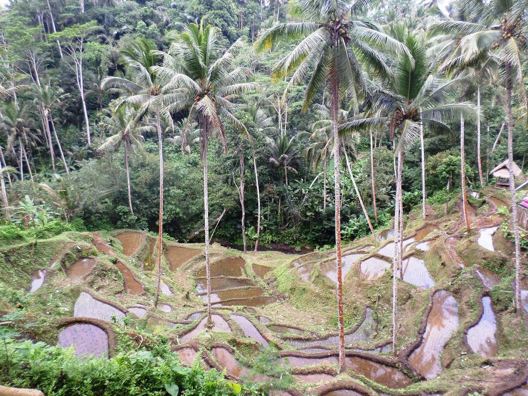La vue sur les rizières