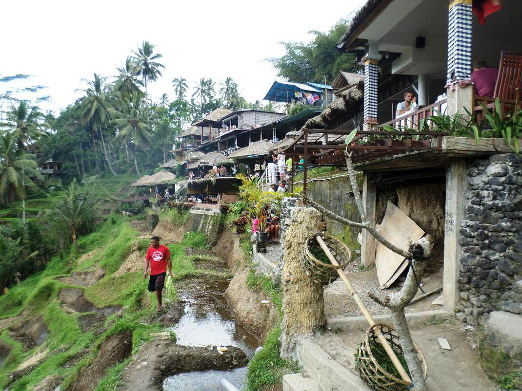 Le haut des rizières est couvert de restaurants
