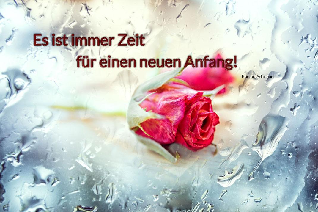 spruchkarte-neuer-anfang-zarte-kleine-rose-rosa-mit-regentropfen