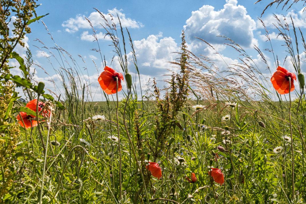 Wunderschöne Feld Und Wiesenblumen Fotos Kostenlos Und