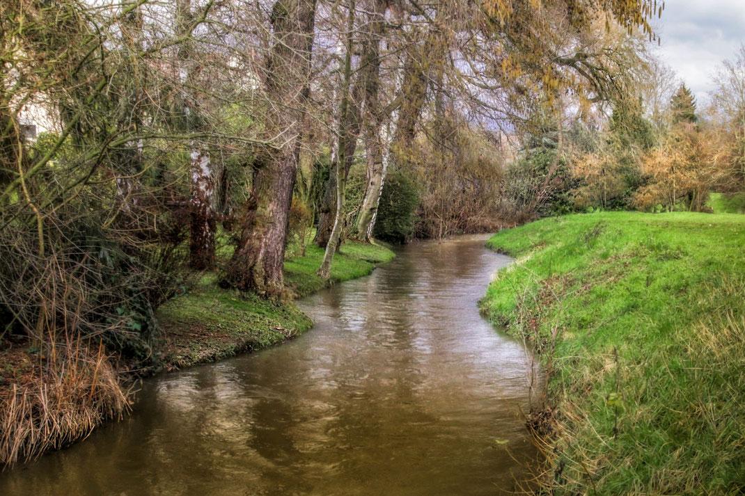 Kleiner Bachlauf. Am Ufer Bäume und Wiese kostenlos downloaden
