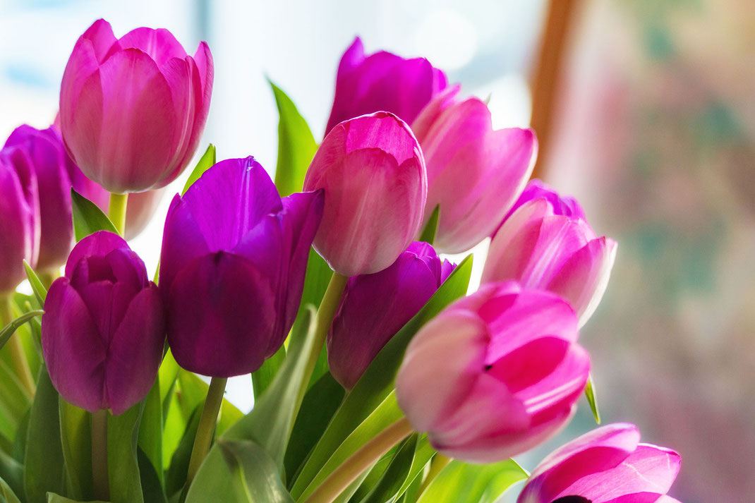 Tulpenstrauß rosa-lila