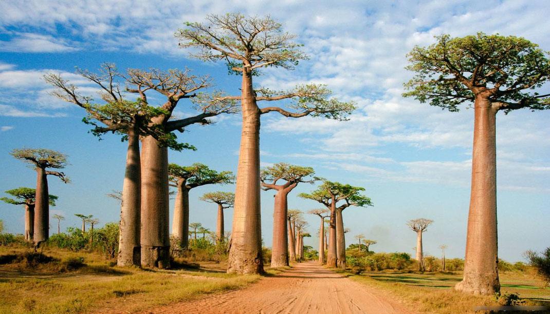 le chemin menant au village africain du Hougan Kader