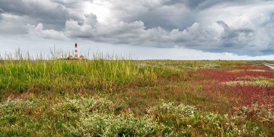 Westerhever leuchtturm, westerheversand, salzwiesen, nordsee, wattenmeer,, fotograf westerhever, fotograf st. peter-ording
