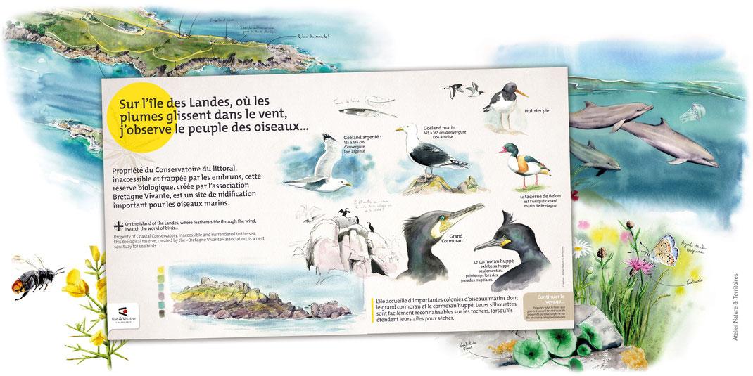 sentier d'interprétation, illustration nature, illustration paysagère, naturaliste, Bretagne, Cancale, oiseaux marins, pointe du Grouin