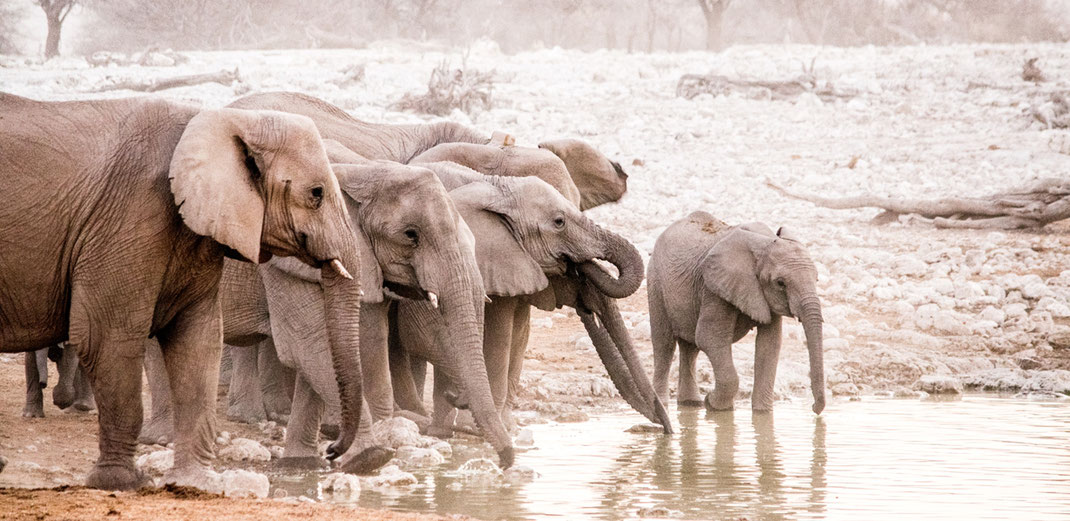 Elefanten am Okaukuejo Wasserloch // Etosha National Park // Namibia